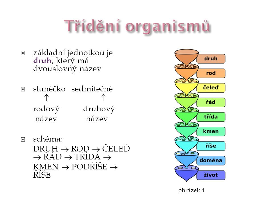 Třídění organismů základní jednotkou je druh, který má dvouslovný název. slunéčko sedmitečné.  