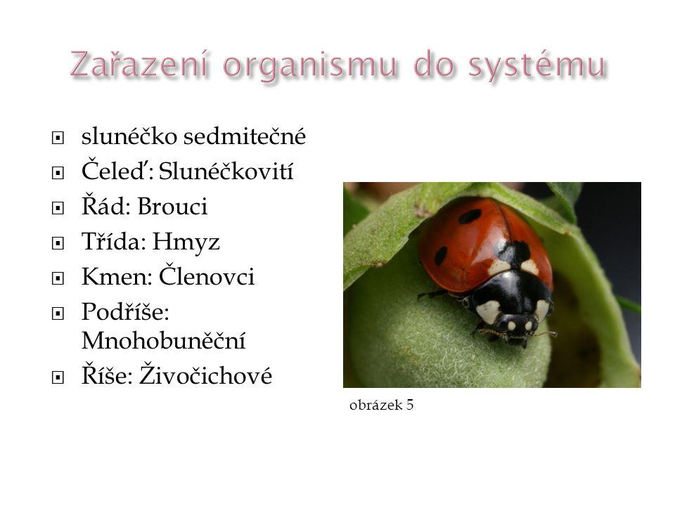 Zařazení organismu do systému