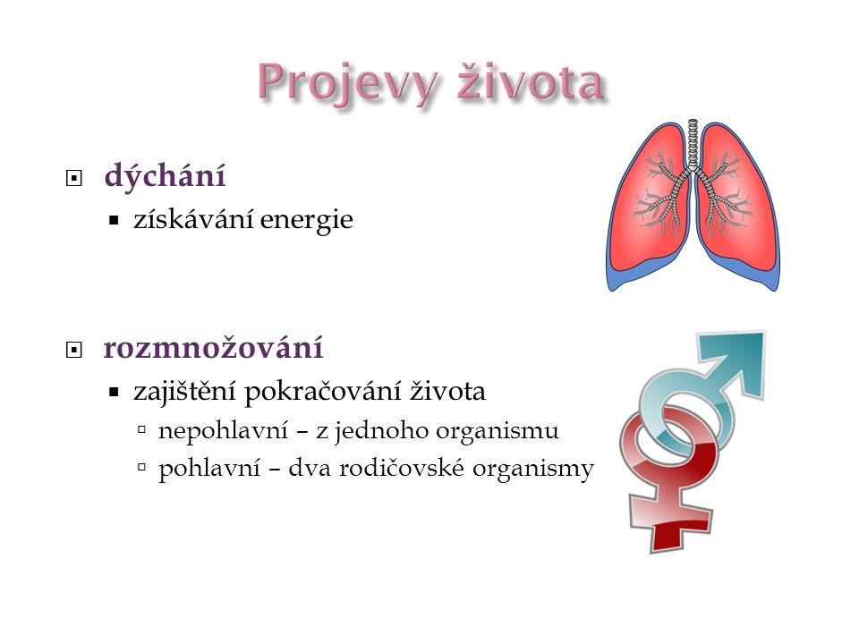 Projevy života dýchání rozmnožování získávání energie