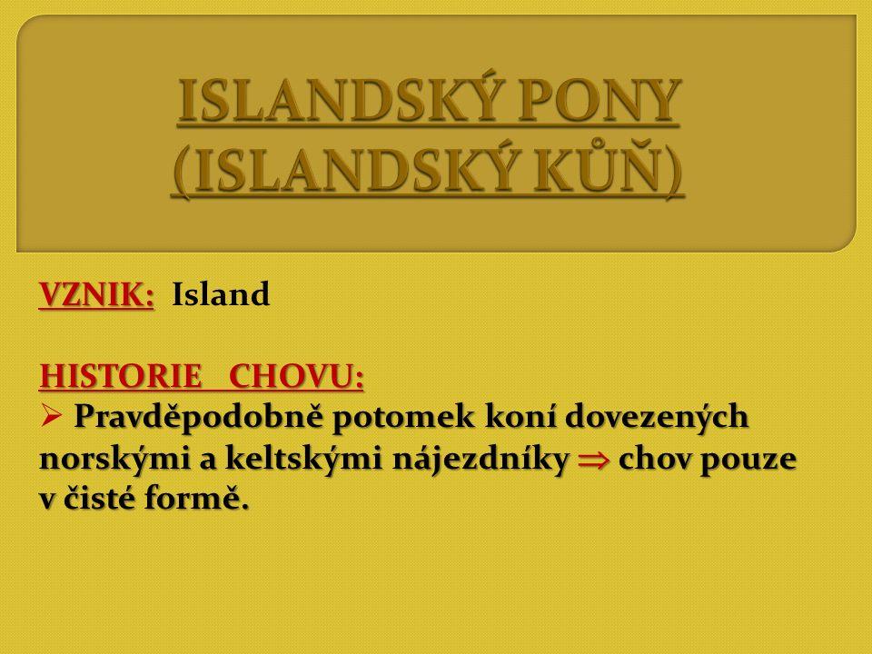 ISLANDSKÝ PONY (ISLANDSKÝ KŮŇ)