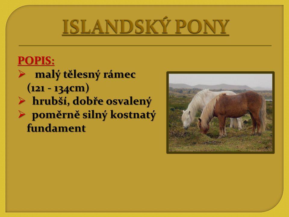 ISLANDSKÝ PONY POPIS: malý tělesný rámec (121 - 134cm)