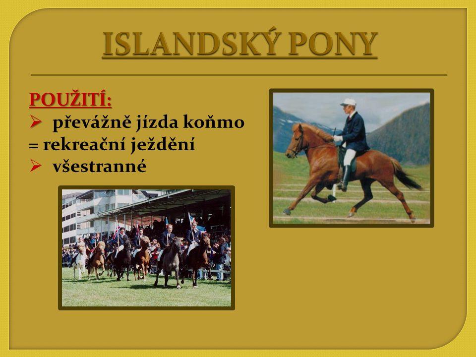 ISLANDSKÝ PONY POUŽITÍ: převážně jízda koňmo = rekreační ježdění