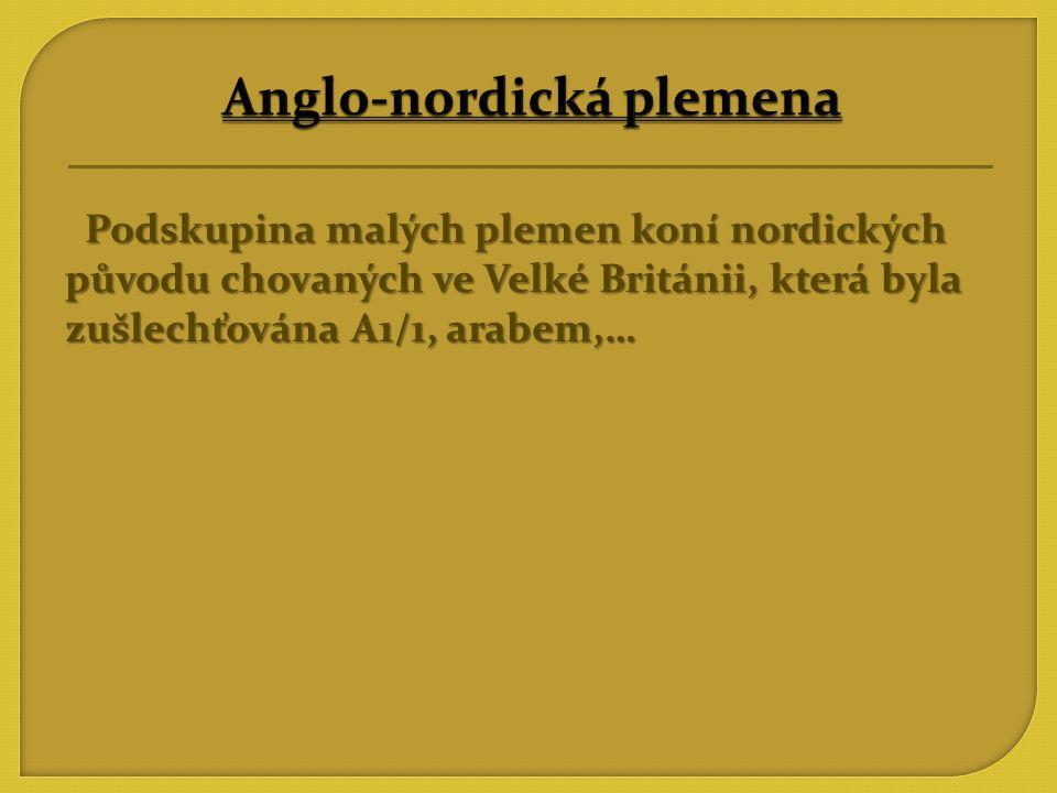 Anglo-nordická plemena