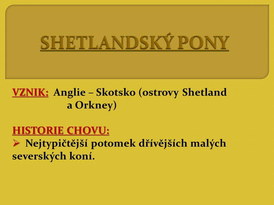 SHETLANDSKÝ PONY VZNIK: Anglie – Skotsko (ostrovy Shetland a Orkney)