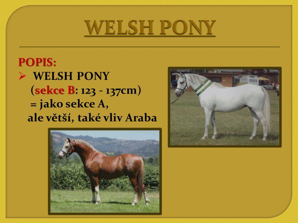 WELSH PONY POPIS: WELSH PONY (sekce B: 123 - 137cm) = jako sekce A,