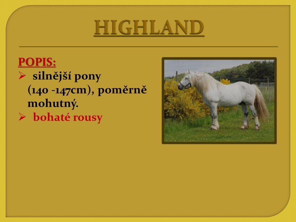 HIGHLAND POPIS: silnější pony (140 -147cm), poměrně mohutný.