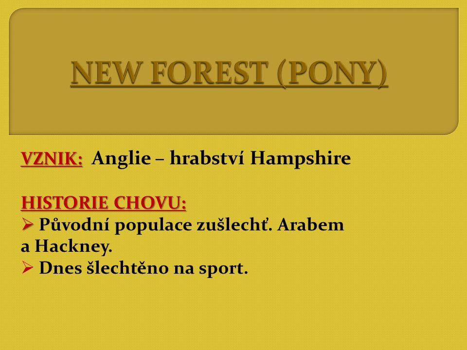 NEW FOREST (PONY) VZNIK: Anglie – hrabství Hampshire HISTORIE CHOVU: