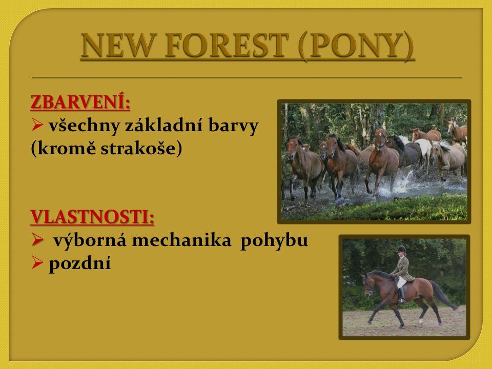 NEW FOREST (PONY) ZBARVENÍ: všechny základní barvy (kromě strakoše)