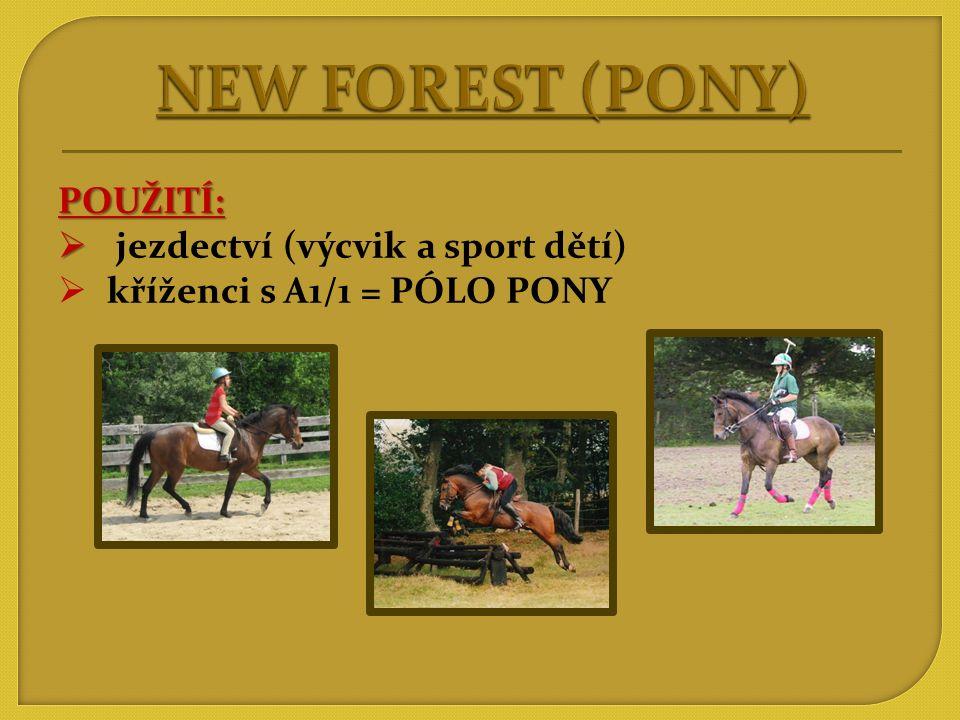 NEW FOREST (PONY) POUŽITÍ: jezdectví (výcvik a sport dětí)