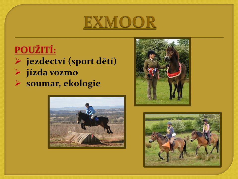 EXMOOR POUŽITÍ: jezdectví (sport dětí) jízda vozmo soumar, ekologie