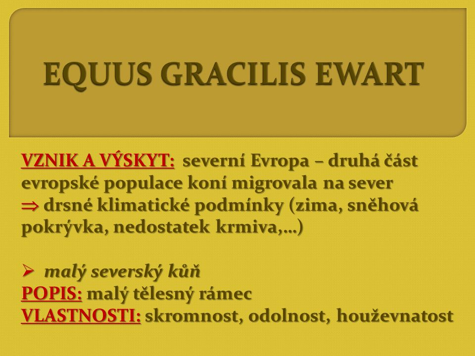 EQUUS GRACILIS EWART