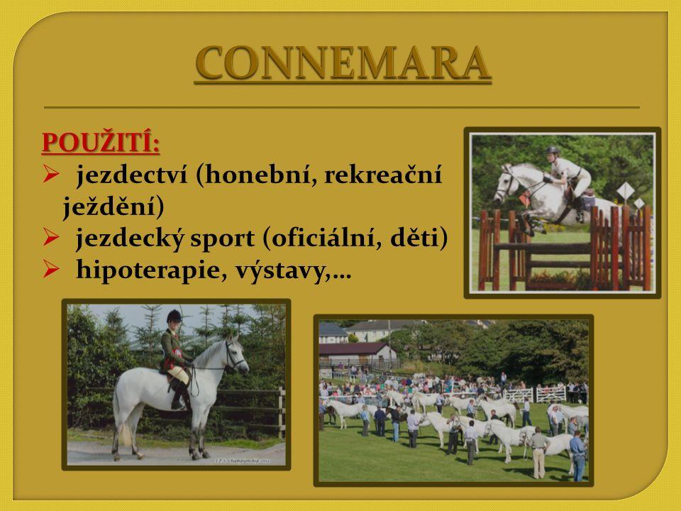 CONNEMARA POUŽITÍ: jezdectví (honební, rekreační ježdění)