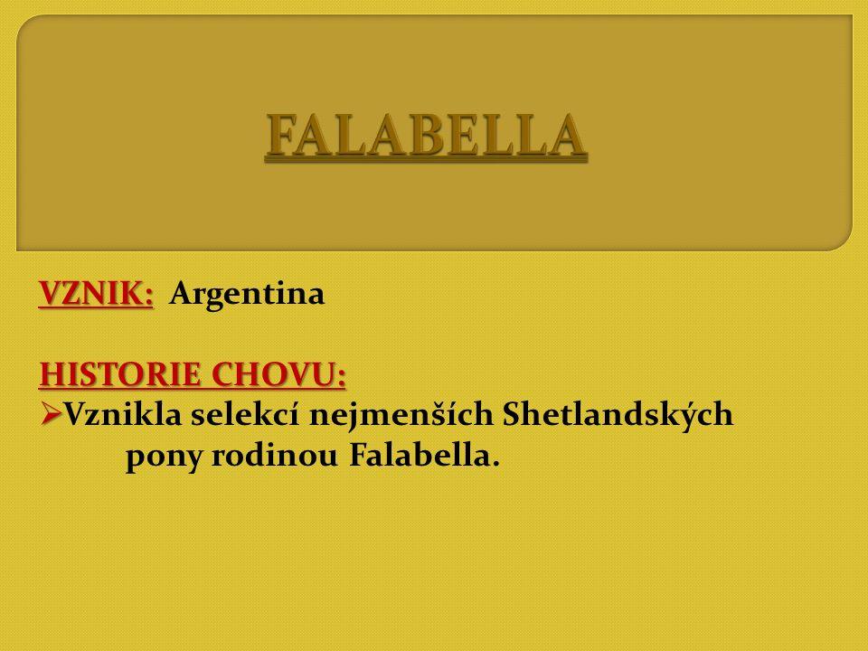 FALABELLA VZNIK: Argentina HISTORIE CHOVU: