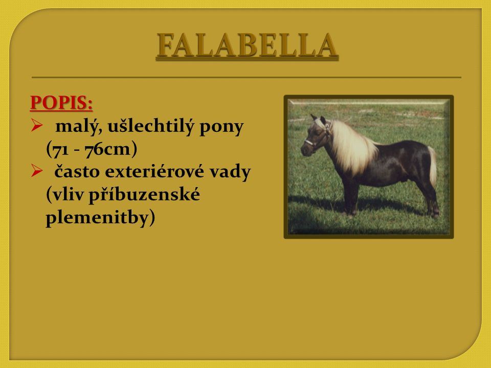 FALABELLA POPIS: malý, ušlechtilý pony (71 - 76cm)