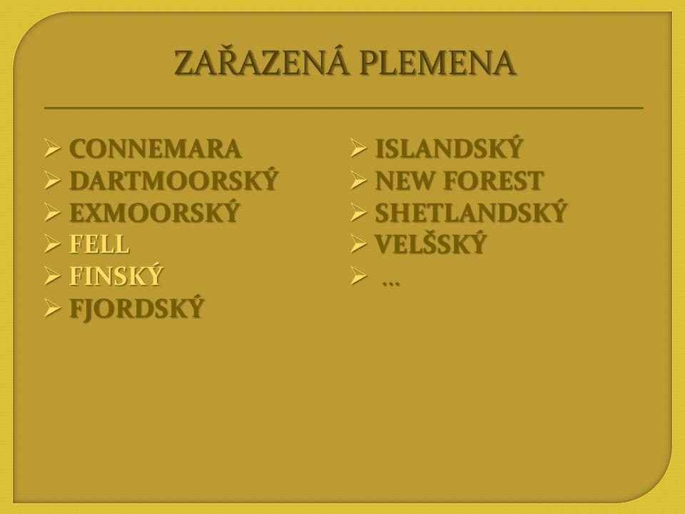 ZAŘAZENÁ PLEMENA CONNEMARA ISLANDSKÝ DARTMOORSKÝ NEW FOREST EXMOORSKÝ
