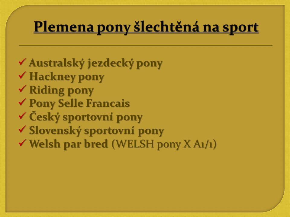 Plemena pony šlechtěná na sport