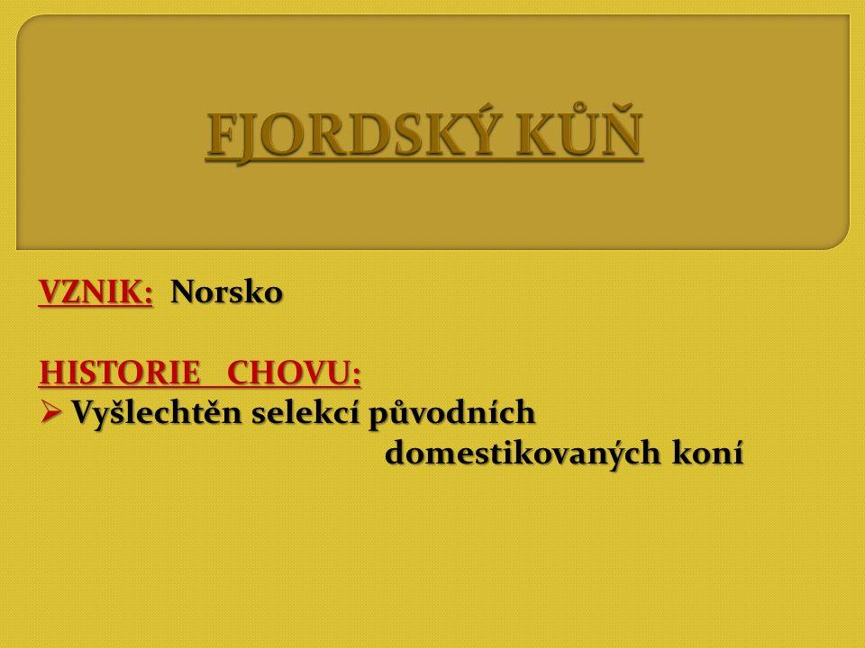 FJORDSKÝ KŮŇ VZNIK: Norsko HISTORIE CHOVU: