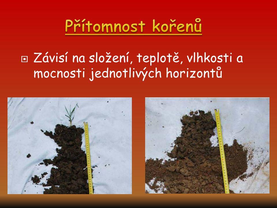 Přítomnost kořenů Závisí na složení, teplotě, vlhkosti a mocnosti jednotlivých horizontů