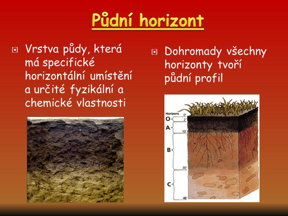 Půdní horizont Vrstva půdy, která má specifické horizontální umístění a určité fyzikální a chemické vlastnosti.