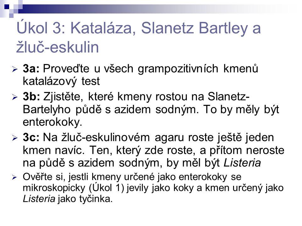 Úkol 3: Kataláza, Slanetz Bartley a žluč-eskulin