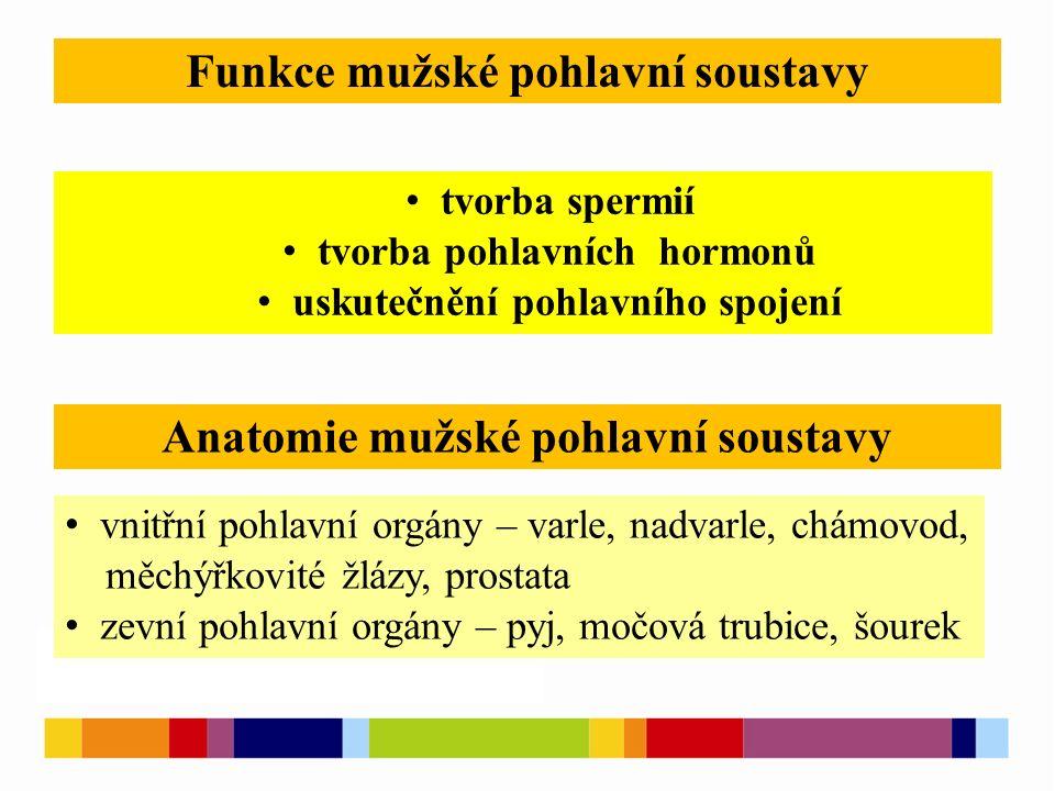 Funkce mužské pohlavní soustavy Anatomie mužské pohlavní soustavy