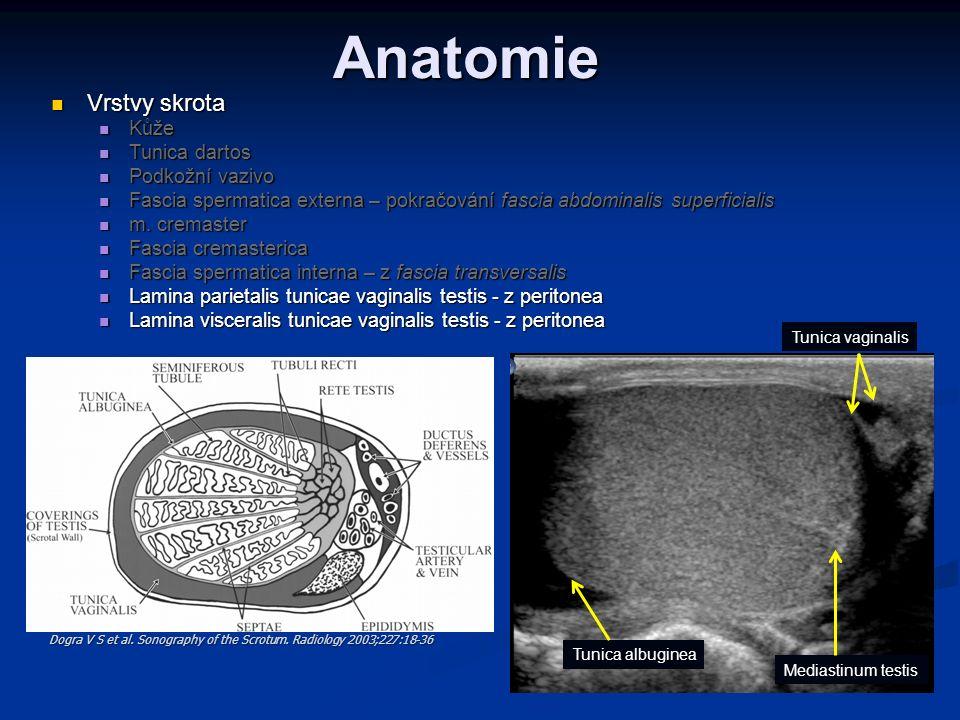 Anatomie Vrstvy skrota Kůže Tunica dartos Podkožní vazivo