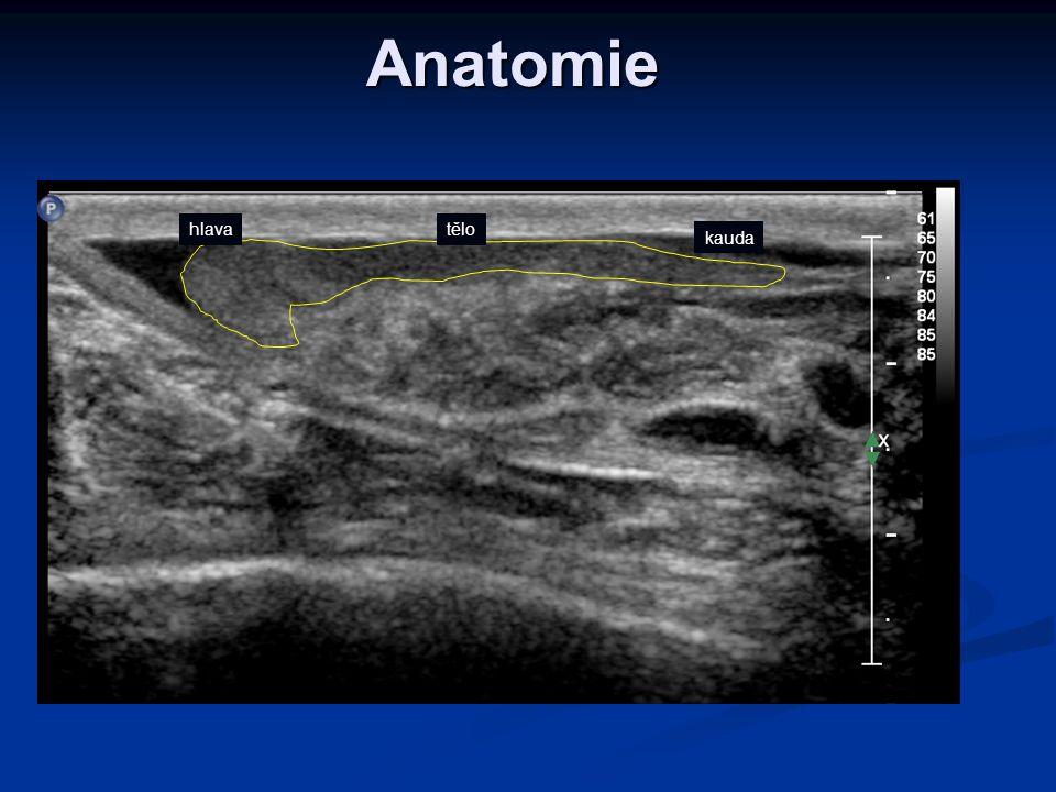 Anatomie hlava tělo kauda