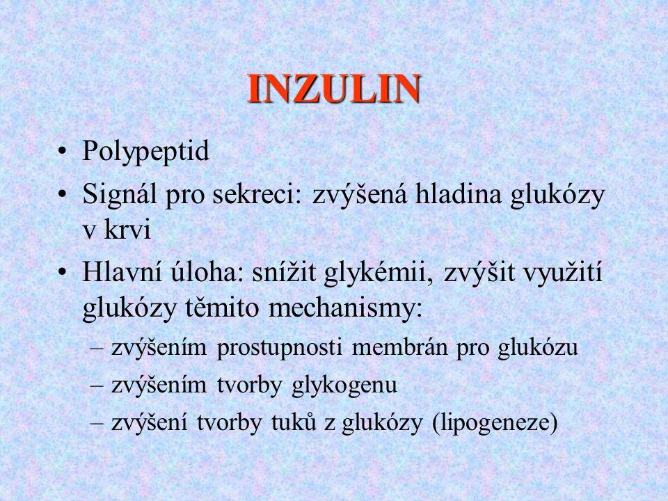 INZULIN Polypeptid Signál pro sekreci: zvýšená hladina glukózy v krvi