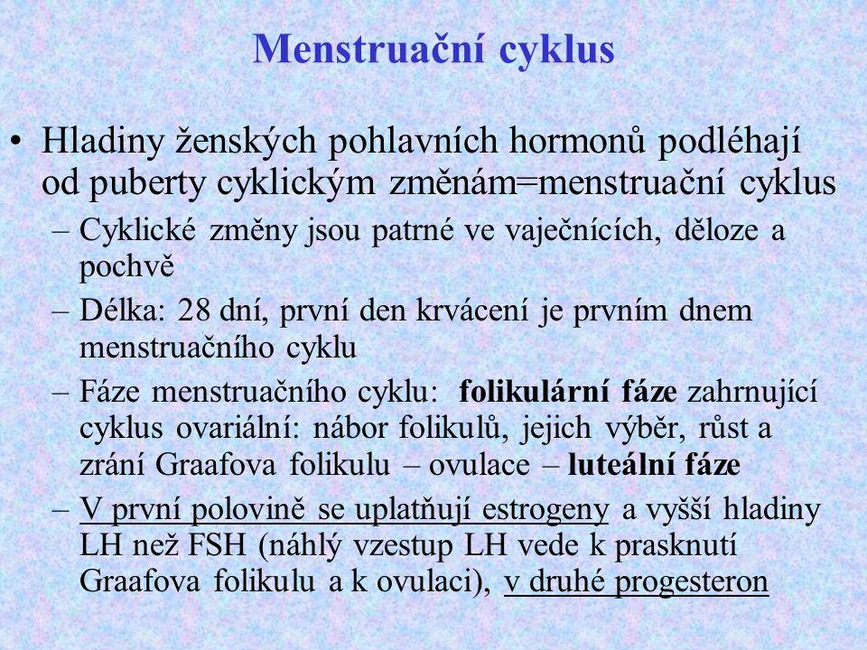Menstruační cyklus Hladiny ženských pohlavních hormonů podléhají od puberty cyklickým změnám=menstruační cyklus.