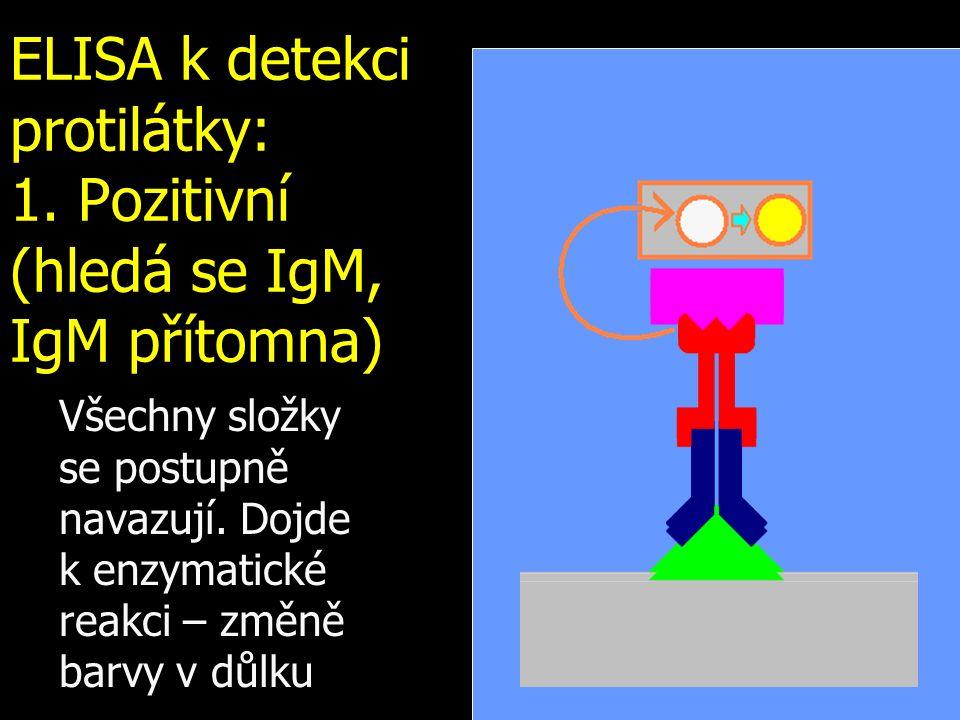 ELISA k detekci protilátky: 1. Pozitivní (hledá se IgM, IgM přítomna)