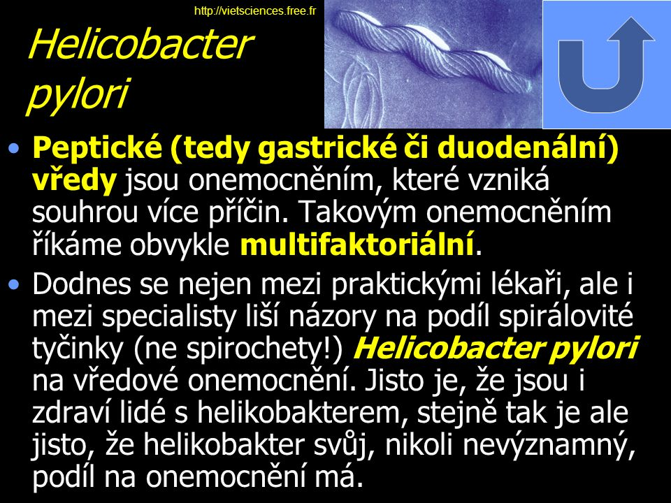 http://vietsciences.free.fr Helicobacter pylori.