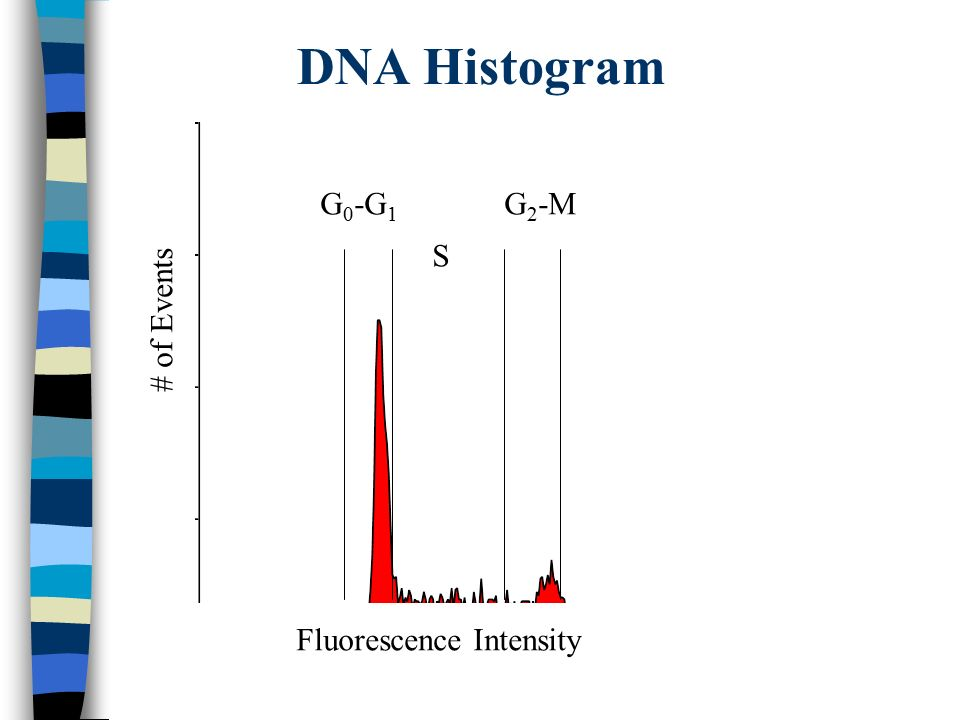 DNA Histogram G0-G1 G2-M S # of Events Fluorescence Intensity