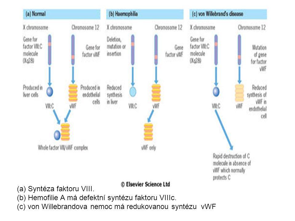 (a) Syntéza faktoru VIII.