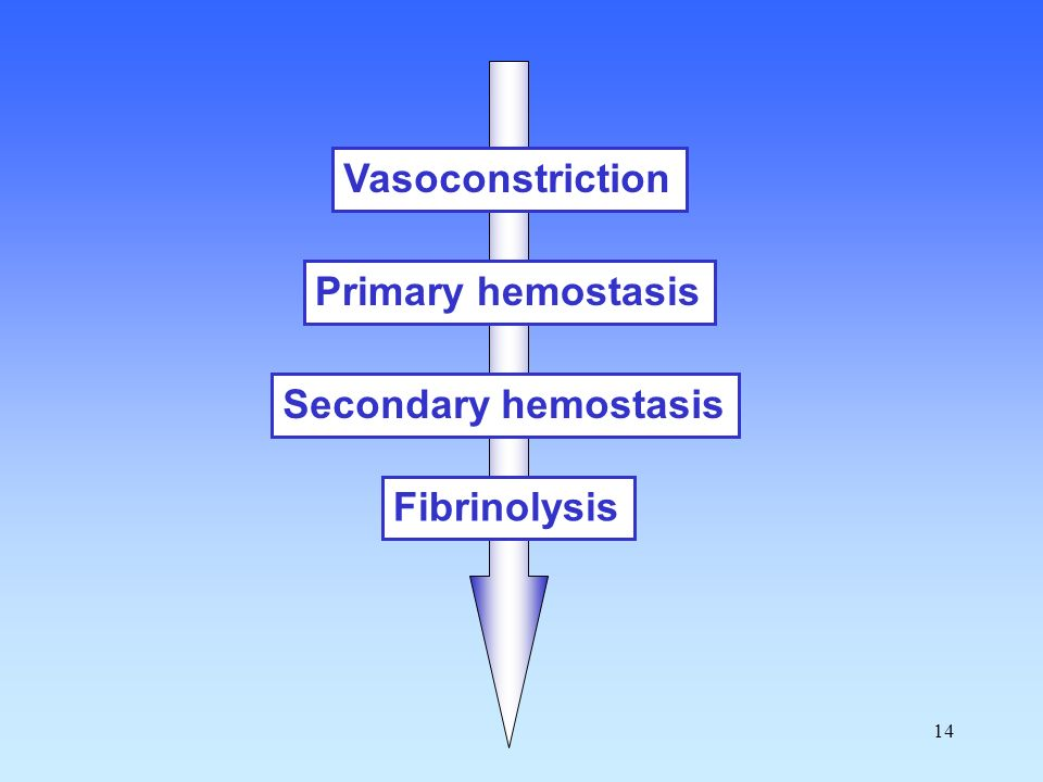 Vasoconstriction Primary hemostasis Secondary hemostasis Fibrinolysis
