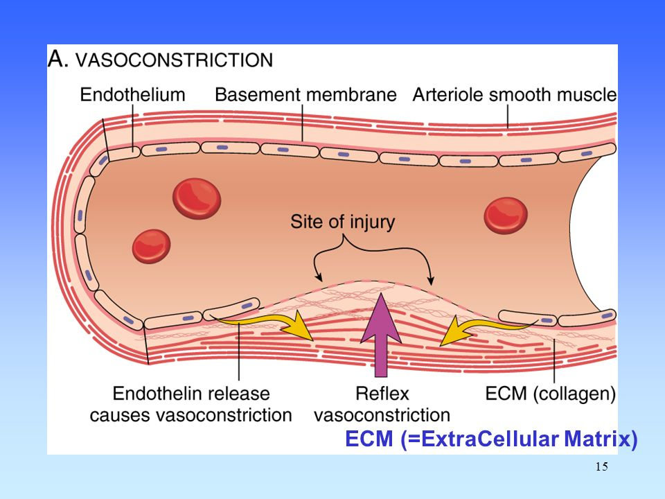 ECM (=ExtraCellular Matrix)