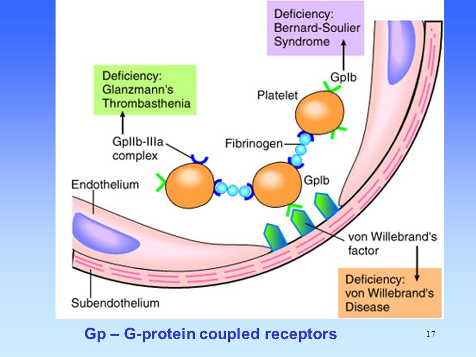 Gp – G-protein coupled receptors