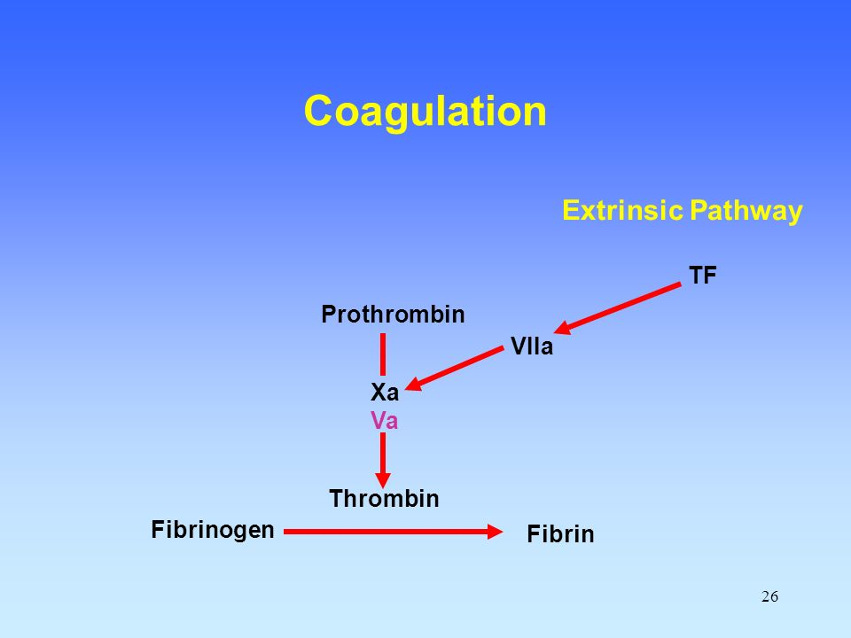 Coagulation Extrinsic Pathway TF Prothrombin VIIa Xa Va Thrombin