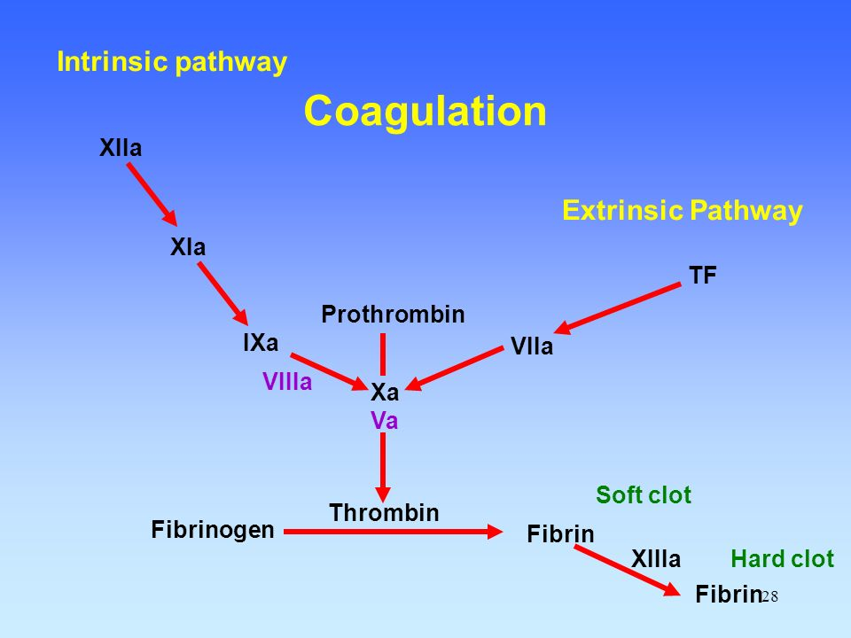 Coagulation Intrinsic pathway Extrinsic Pathway XIIa XIa TF