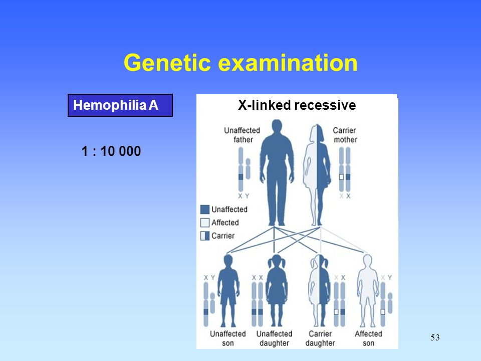 Genetic examination Hemophilia A X-linked recessive 1 : 10 000