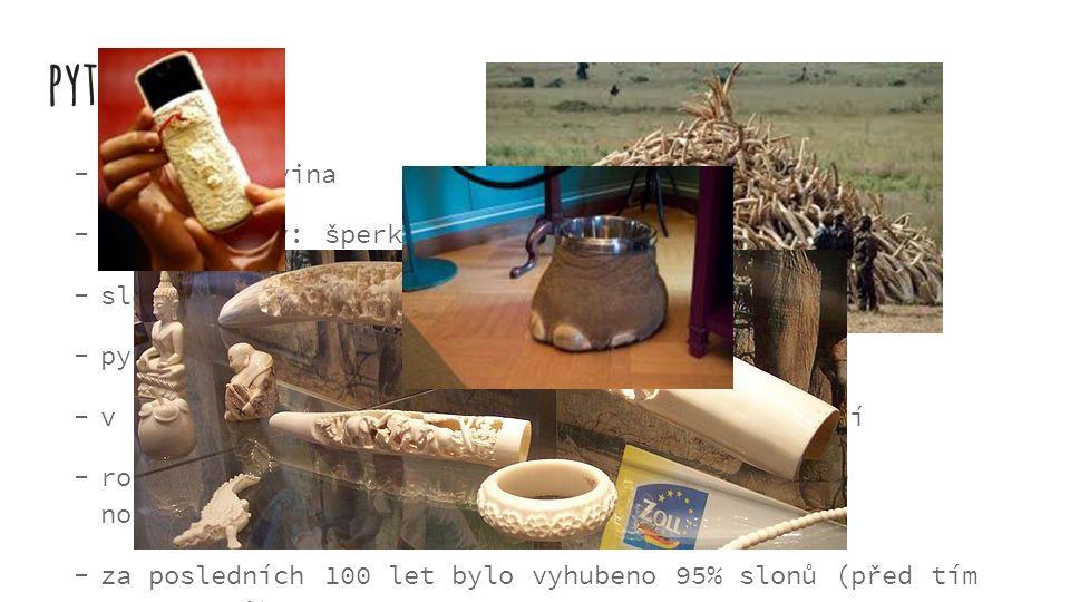 pytláctví kly = slonovina ze slonoviny: šperky, nádoby…