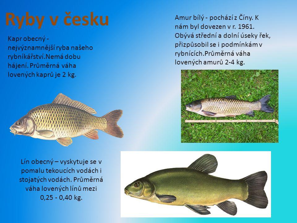 Ryby v česku