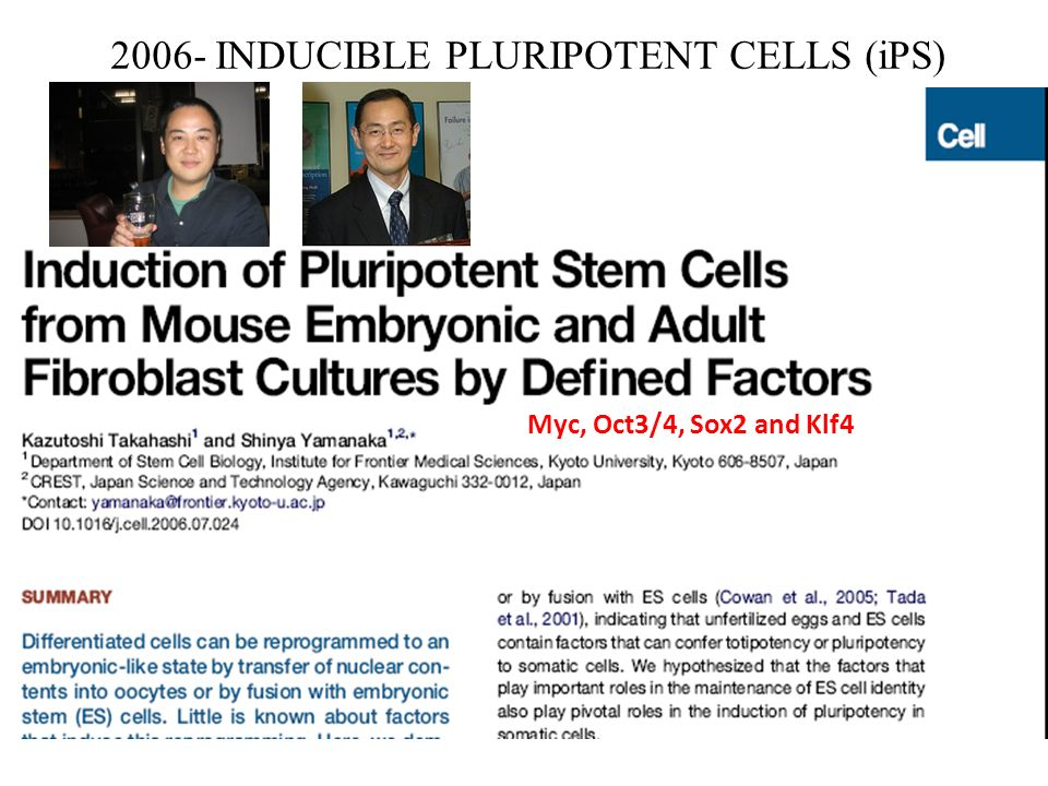 2006- INDUCIBLE PLURIPOTENT CELLS (iPS)