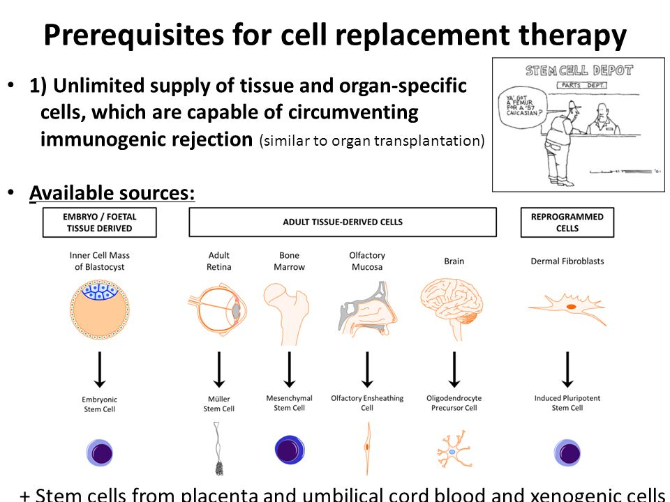 Prerequisites for cell replacement therapy