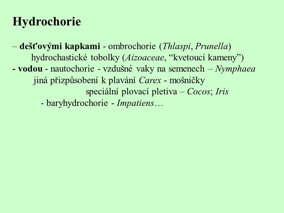 Hydrochorie – dešťovými kapkami - ombrochorie (Thlaspi, Prunella)