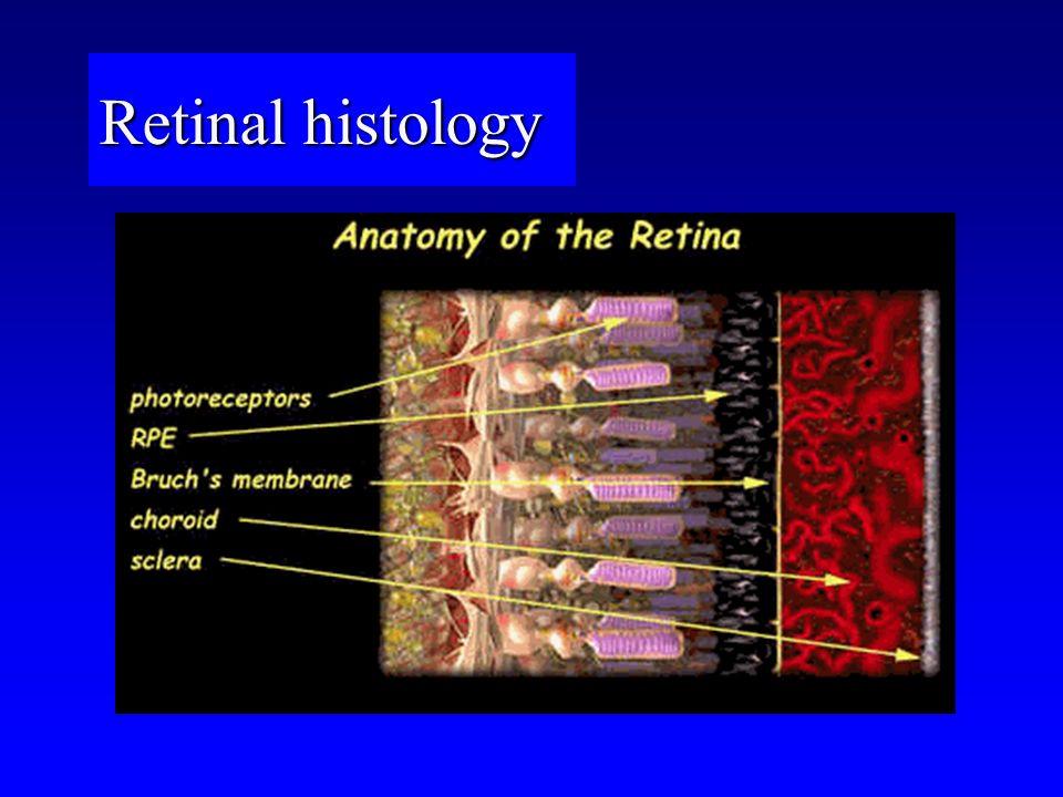 Retinal histology