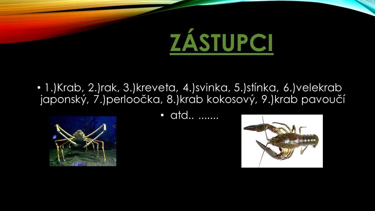 Zástupci 1.)Krab, 2.)rak, 3.)kreveta, 4.)svinka, 5.)stínka, 6.)velekrab japonský, 7.)perloočka, 8.)krab kokosový, 9.)krab pavoučí.