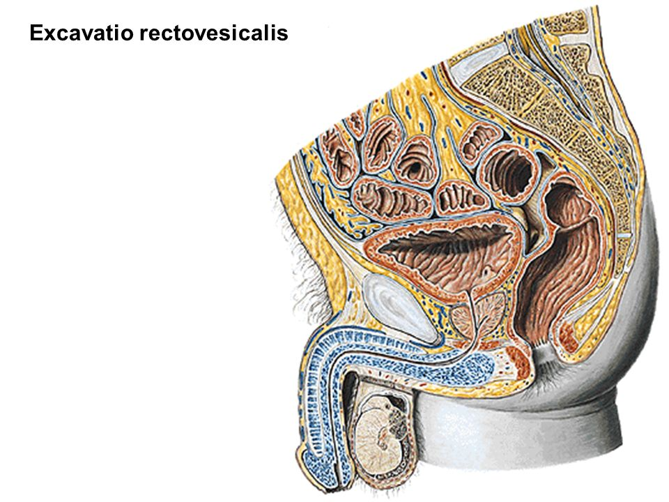 Excavatio rectovesicalis