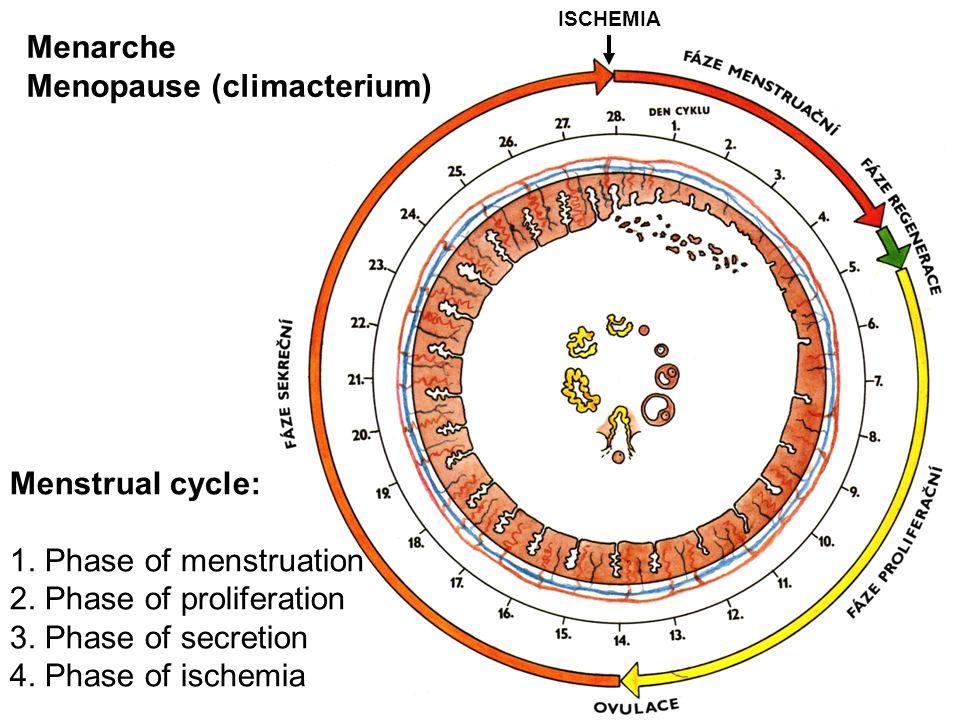 Menopause (climacterium)