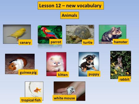 Canary parrot turtle hamster guinea pig kitten puppy rabbit tropical fish white mouse Lesson 12 – new vocabulary Animals.