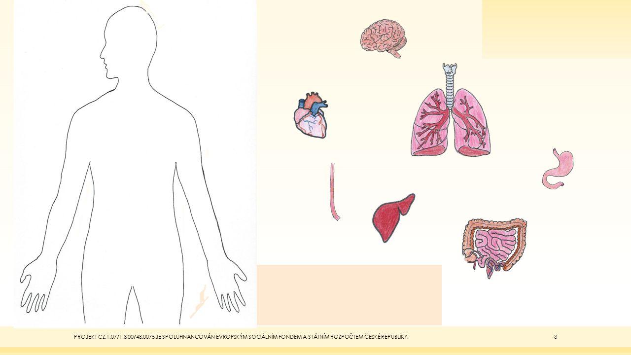 Telo Vnitrni Organy Lidske Telo Ppt Stahnout